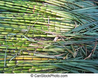 Sugarcane background