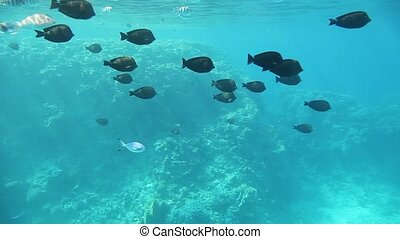 Underwater footage of various fish swimming in tropical...