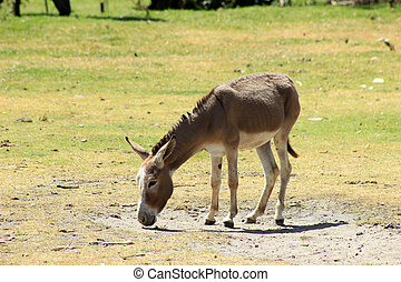 Donkey Standing in a Pasture