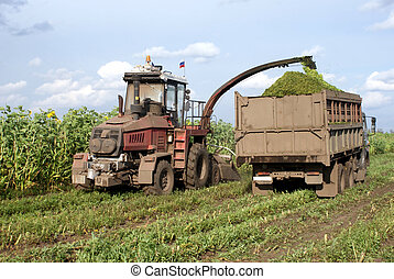 Fodder - Cleaning in the fields of forage crops agricultural...