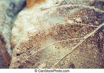 Leaf of Lace - Delicate leaf skeleton macro close up