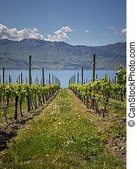 Winery View - Okanagan Scenics