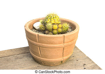 Cactus green yellow sharp spines with different texture in...