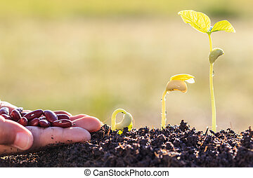 Hand holding seed and growth of young green plant in soil
