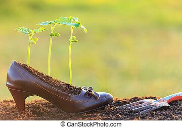 planta, concepto, joven, Crecimiento, reciclar, zapato, dama
