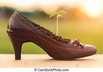 Young plant growth in lady shoe
