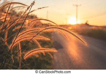wild grass beside the road at sunset background