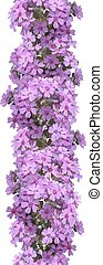 Vertical seamless pattern of flowers phlox Isolated on white...