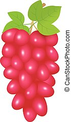 Red grapes - Illustration of red grapes branch