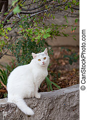 White fluffy cat sits on a stone fence