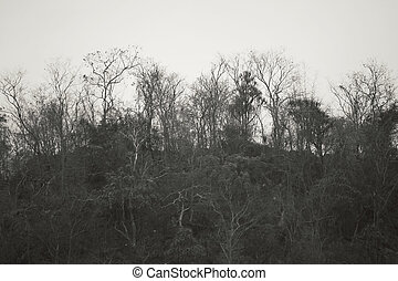Mountain with tree branches