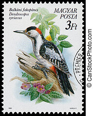 Stamp printed in Hungary shows the Syrian Woodpecker -...