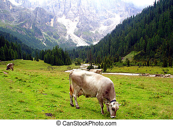 Cow on green pasture