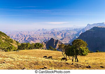 Panorama, Simien Mountains, Ethiopia - Panoramic view from...