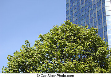 Glasgow-06-0111 - Trees in front of blue skyscraper in...
