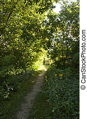 woodland path with sunshine at the end