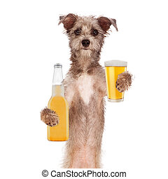 Terrier Dog Drinking Beer - A cute little terrier breed dog...