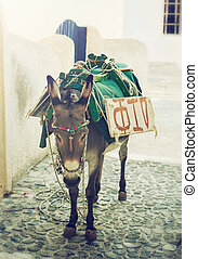Donkey in Santorini - Donkey in the streets of Santorini...