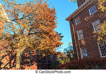 Harvard Fall Dorms - Colorful fall foliage and historic dorm...