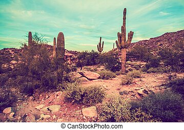 Arizona Desert Landscape Oldschool Color Grading. Arizona,...