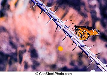 Butterfly on Thorny Branch - Monarch Butterfly on Thorny...
