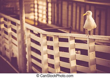 California Sea Gull on the Marina Wood Fence. Vintage Color...