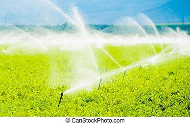 Farm Field Irrigation. Crop Irrigation in California...
