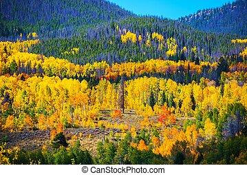 Colorful Colorado Autumn Colorado October Landscape, United...