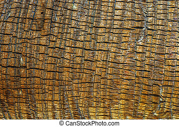 Palm Tree Bark Wooden Material Background