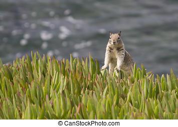 Peek-A-Boo Squirrel - Cute squirrel peeking at the...