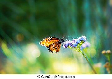 Summer Meadow Butterfly Nature Photo Background with Copy...