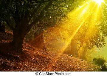 Scenic Forest Trail with Intensive Sun Rays Coming Through...
