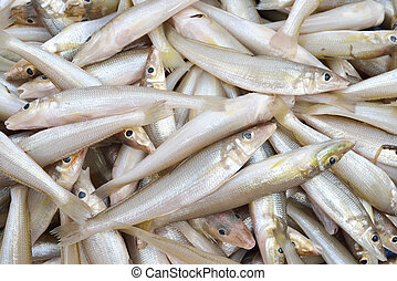smelts fish - Fresh many smelts fish in market ,thailand