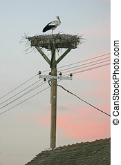 Stork in nest on electric pole - A white stork standing in...