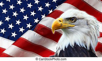 águila, bandera, calvo, norte, norteamericano