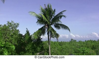 Calm with Palm Tropical Breeze - Feel the tropical breeze to...