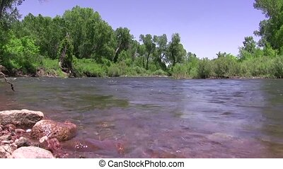 Downstream River Flow Green Forest - Birds chirp as the...