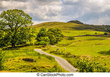 Rural scene in Cumbria - Scenic view of a picturesque rural...