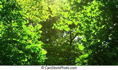 Sunshine through the trees.