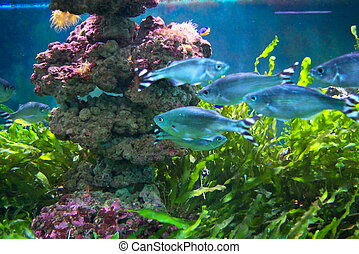 Sea aquarium - photo of the aquarium with beautiful tropical...