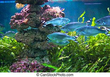 Sea aquarium - photo of the aquarium with beautiful tropical...