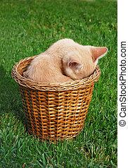 Shy kitten - Cute yellow kitten hiding in a basked.