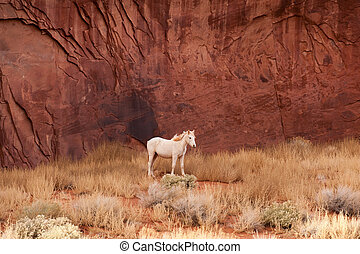 Monument Valley - White horse by the red rocks of Navajo...