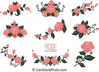 Pink rose Collection, vector illustration