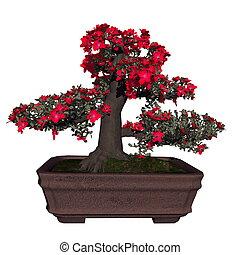 Satsuki azalea tree bonsai - 3D render - Satsuki azalea tree...