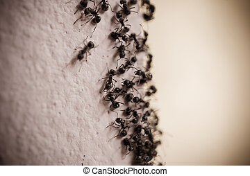 Group of carpenter ants on the wall Close up