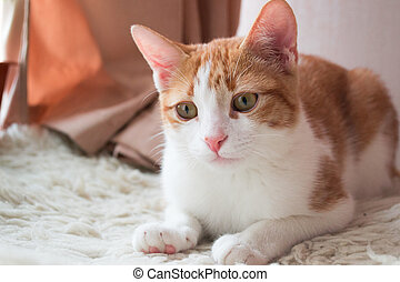 Lovable red cat  on fur carpet