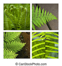 Fern - Collage of various fern in a park