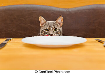 young cat after eating food from kitchen plate. Focus on a...