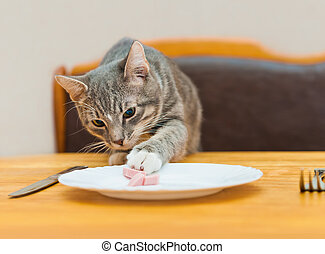 young cat eating food from kitchen plate focus on cat